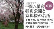 平岡八幡宮特別公開と京都桜の名所