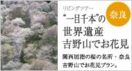 """""""一目千本""""の世界遺産 吉野山でお花見"""