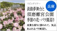 淡路夢舞台と須磨離宮公園 季節の花・バラ園巡り
